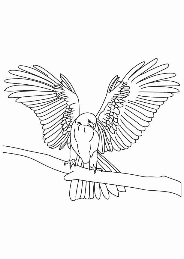 Peregrine Falcon Coloring Page Inspirational Peregrine Falcon