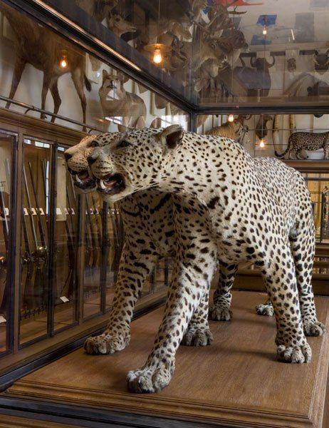 Wildlife on display at Musée de la Chasse et de la Nature, a favorite spot of architect Morgan Hare of Leroy Street Studio.