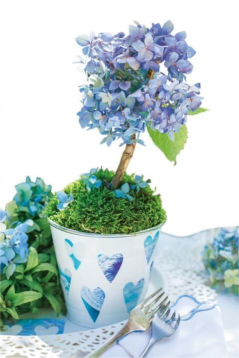51 besten hortensien bilder auf pinterest - Deko mit hortensien ...