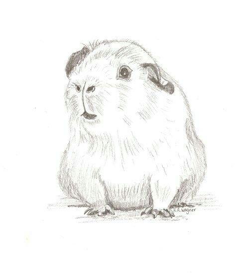 Pet Portraits Pencil