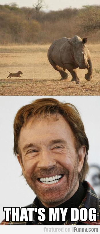 Chuck Norris is my favorite. Out of almost everyone.