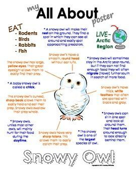 """This """"All About"""" book will be a fun addition to your classroom and lessons on snowy owls. Other Polar/Arctic animal books available are: Polar Bear, Walrus, Emperor penguin, caribou, Arctic wolf, Arctic fox, Beluga whale, Arctic hare and puffin.  http://www.teacherspayteachers.com/Store/Courtney-Mckerley:"""