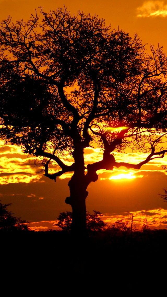 Kruger Park Sunset, South Africa iPhone 5 wallpapers, backgrounds, 640 x 1136