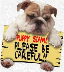 pet scam, pet shipping scam. puppy for sale