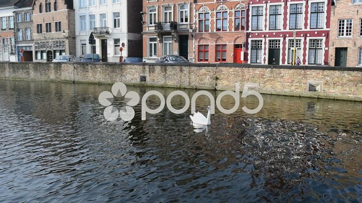 A swan on a canal in Bruges, Belgium. The swan swims out of shot - Stock Footage | by glenman77