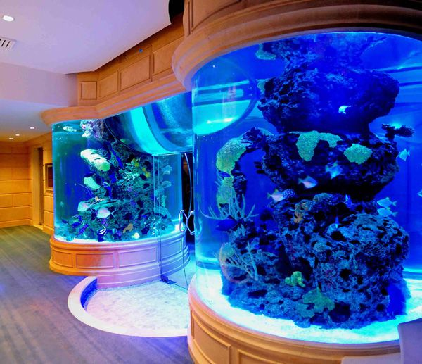 99 best images about aquarium ideas i love on pinterest for Blue light for fish tank