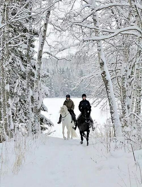 How sublime to go on a snowy horseback ride!