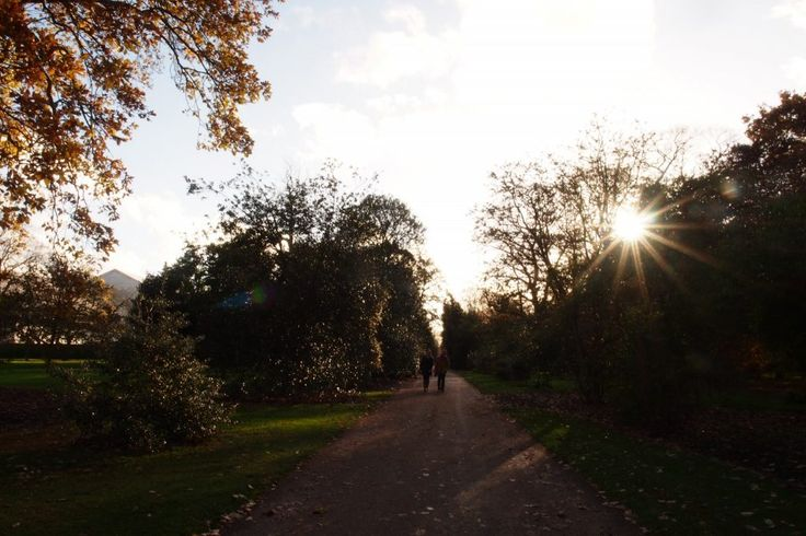 The Holly Walk at the Royal Botanic Gardens, Kew, pictured in November.