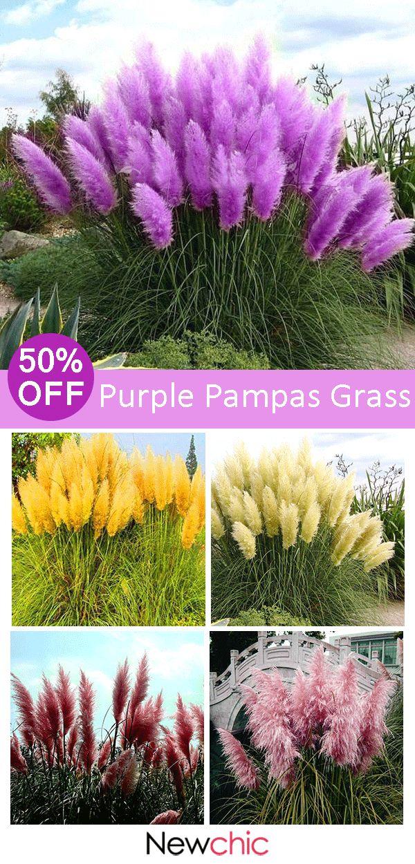 【50% off】200Pcs Pampas Grass Magic Garden Seed Potted Ornamental Plants Cort… – Engelchen