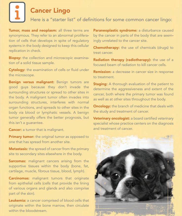 Best Vet Tech Life Images On   Veterinary Medicine