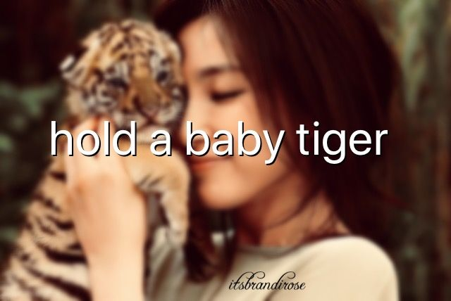 Bucketlist: held a baby tiger with my grandsons Chad and Stanlee