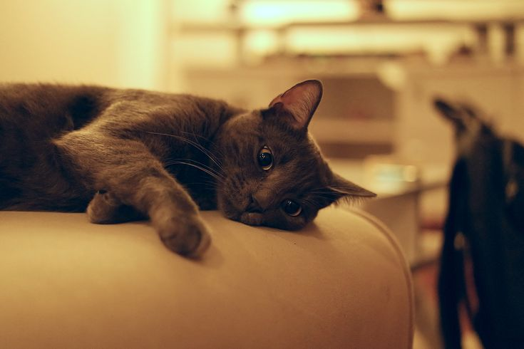 Simple Care Tips For Cat Lovers >>> Check this useful article by going to the link at the image. #Cats
