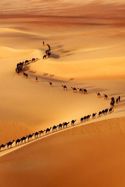 Stunning Photography (10 Amazing Snapshots), Camel Train - border of Saudi Arabia and UAE.