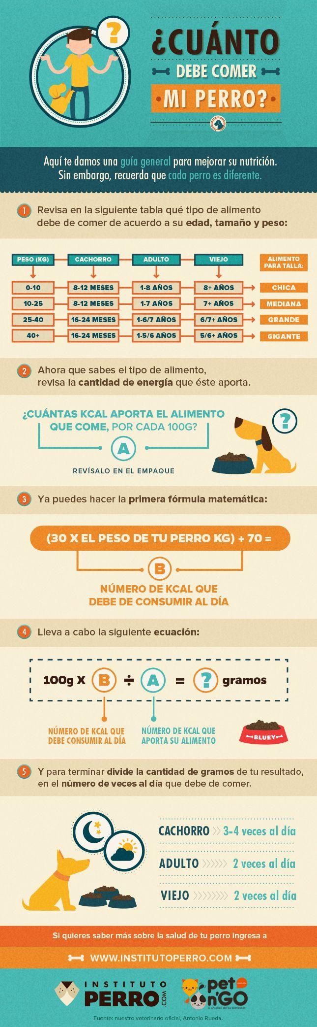 ¿Cuánto debe comer mi perro? | pet n'GO