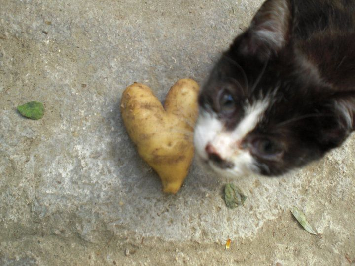 aardappel <3 potato