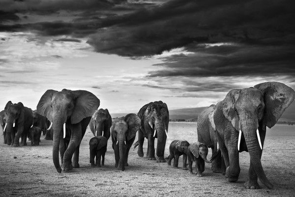 Elephants. BelAfrique your personal travel planner - www.BelAfrique.com