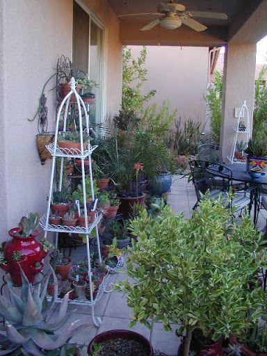 79 Best Garden In Arizona Images On Pinterest | Desert Gardening, Arizona  Gardening And Arizona