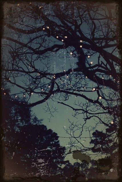 summer lights.: Inspiration, Starry Night, Pin, Art, Lights In Trees, Summer Nights, Beautiful Lights