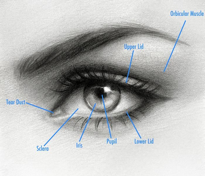 Start Drawing: Techniques for Pencil Portraits - Skillshare
