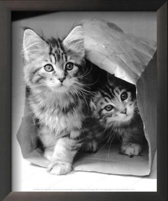Imágenes de Gatos - Vol.6 (20 Fotos) #facebook_cover #portada_facebook