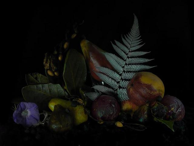 Still life by Fiona Pardington