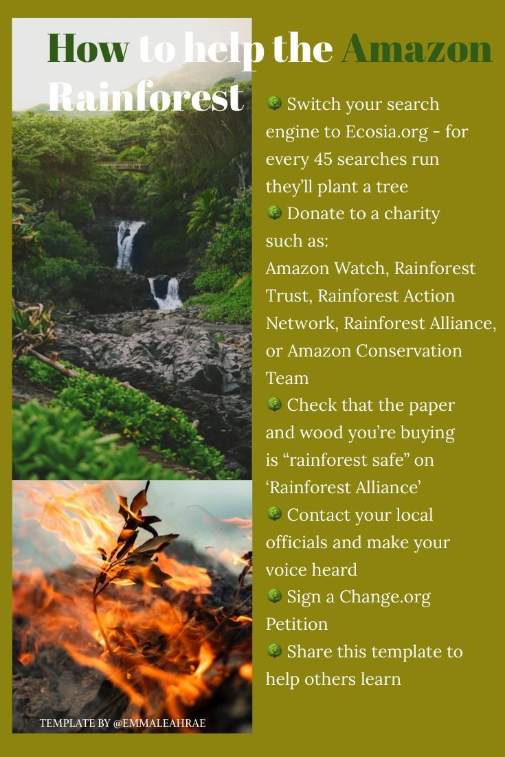 The Amazon Rainforest Is On Fire Here S How You Can Help