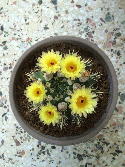 My cactus <3