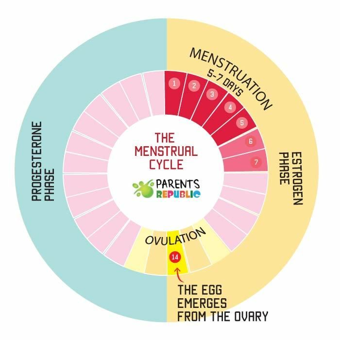 menstrual cycle | Trying to conceive | Chances of getting pregnant