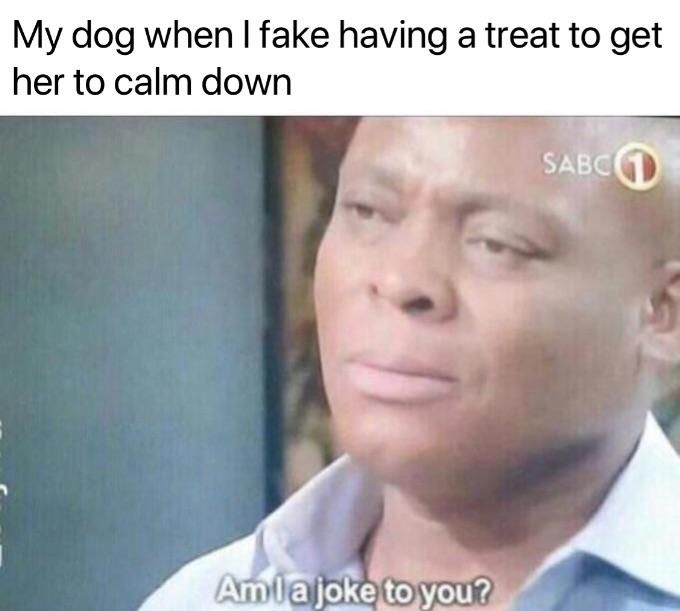 Dog Owners Can Relate Get Daily Funny Funny Memes Memes Video Lol Pic Picoftheday Interesting Quotes Funny Twitte Jokes Biology Memes History Memes