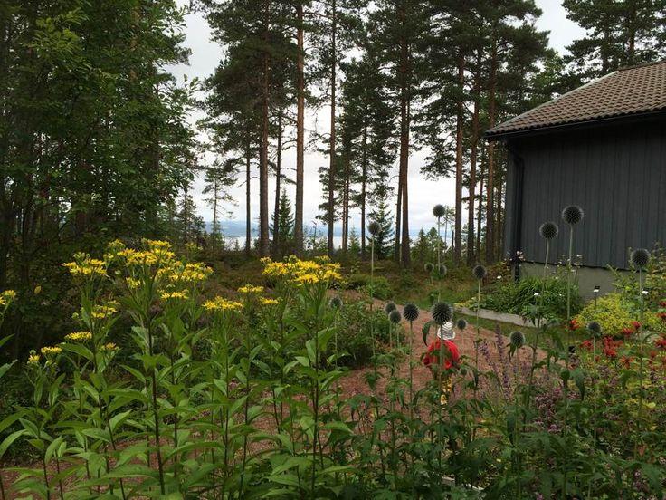 blommor-naturumdalarna-siljansnas