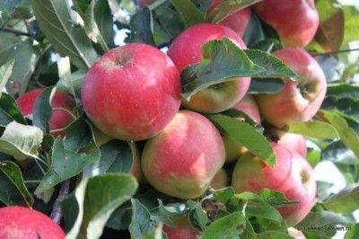Appels; Over design smaak en seizoen