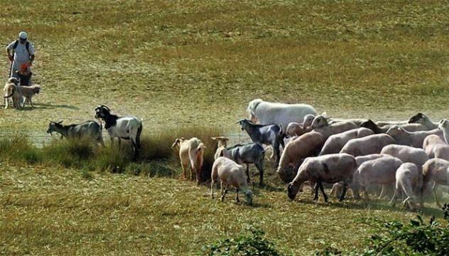 Pasad una mañana con el pastor y descubrid el día a día de un pastor, su ganado de ovejas y cabras y el perro pastor. Una divertida actividad que acerca a los niños y niñas a la naturaleza y a la ganadería