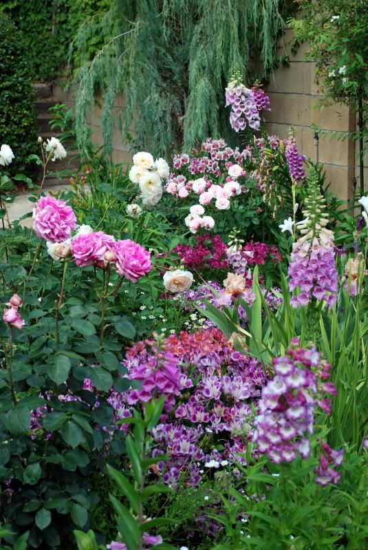 """""""I went to my mom's house today to look at her garden. It looks lovely, so I took some photos to share with you. The pink rose is Guy de Maupassant, the white is Perdita, the small pink is Our Lady of Guadaloupe, the big flowered dark pink is Yves Piaget. The iris is Sweet Musette, and the other flowers are foxgloves, alstroemerias, and columbines.""""  Photo and text by hosenemesis on gardenweb, southern California, May 15, 2011"""