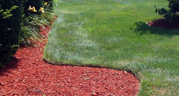 You Don't Need Plastic Edging   I don't know what came over me but a few years ago I got it stuck in my head that I had to have plastic lawn edging. For some reason t...