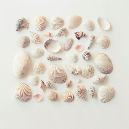 She collects shells to have some connection with something beautiful, and lately in the world they live in, not a lot of things are beautiful.