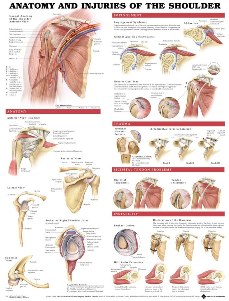 63 best Hand Therapy images on Pinterest | Hand therapy ...