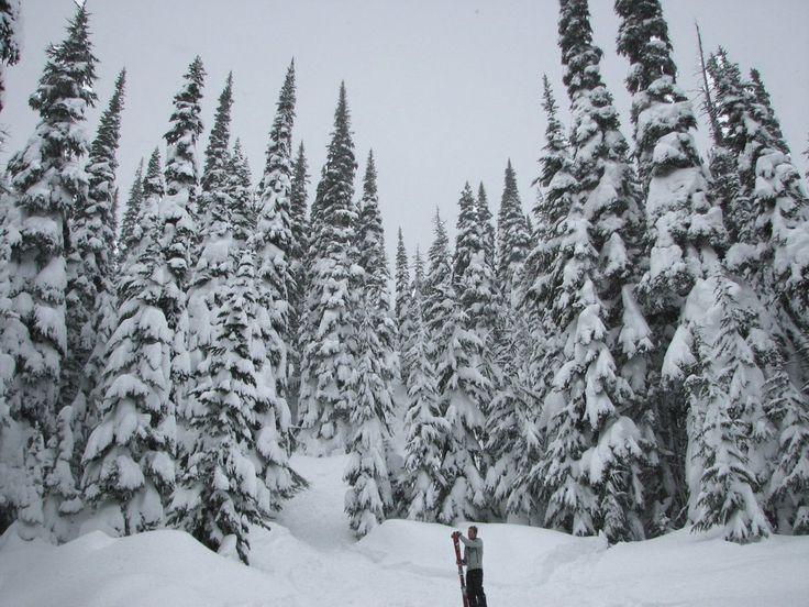 Marmot Trail, Whistler, BC, Canada