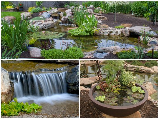 Best 25 waterfall features ideas on pinterest backyard for Koi pond maintenance near me