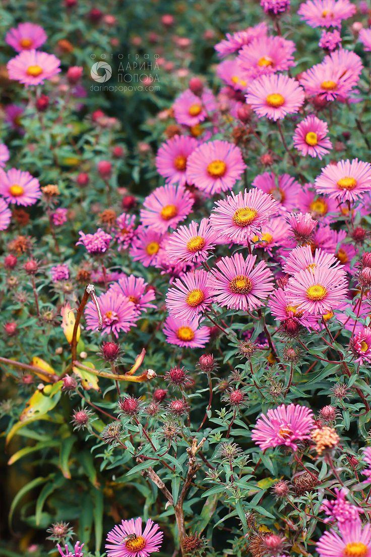 #цветы #природа #розовый #nature #flower #summer
