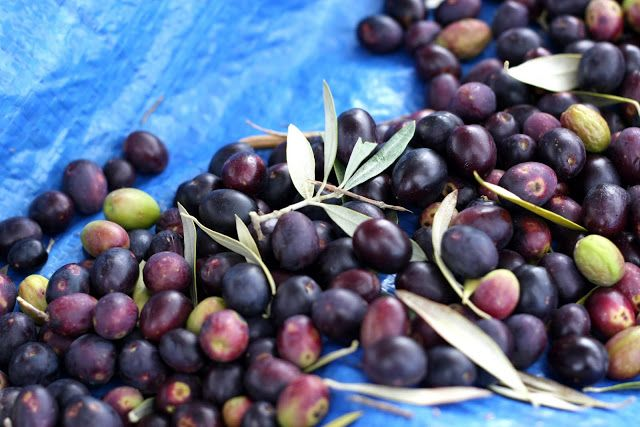 How to Cure Fresh Olives at Home | Wandering Spice