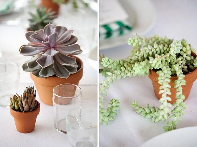 succulent table decorations
