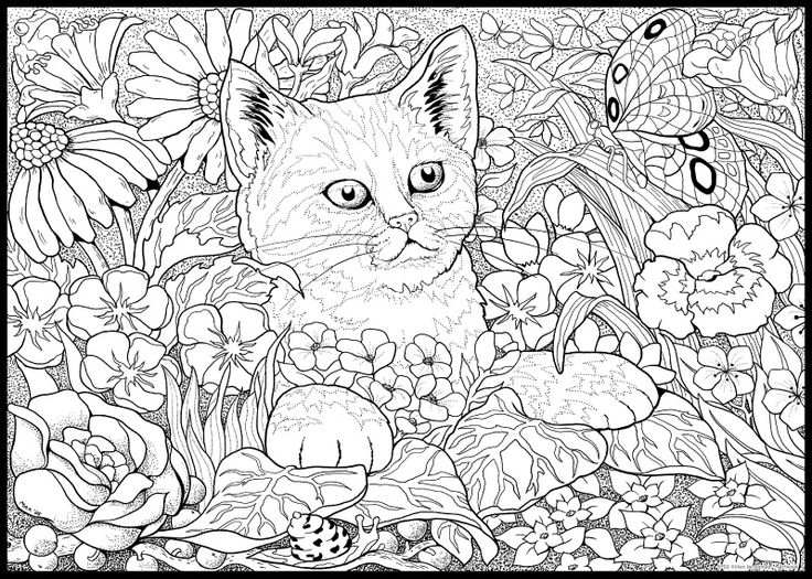 3399 best Color images on Pinterest Coloring pages, Coloring books - best of coloring pages black cat