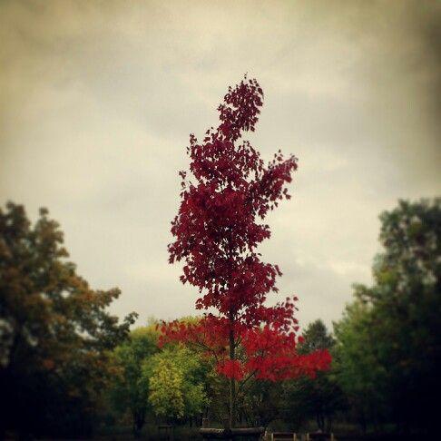 #park #janapawla2 #autumn #fall #wilda #poznan