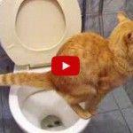 ¡Increíble!: Gato Usa WC