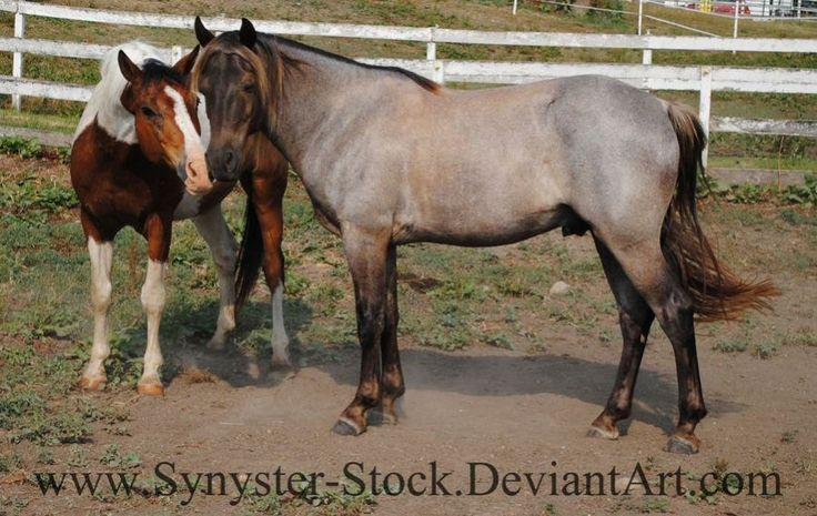 322 best Horse Color Galore: Roan images on Pinterest ...
