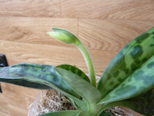 Выращивание растений в серамисе - Все о комнатных растениях на flowersweb.info