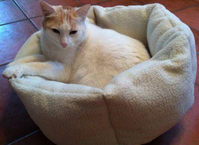 Cuccia piccola color crema per gatti #CucciaGatto #CucciaPiccola #PiccolaCuccia #CucciaCrema http://www.principini.it/prodotti/gatti/cucce-nicchie-gatti/cuccia-piccola-per-gatti-o-piccoli-cani
