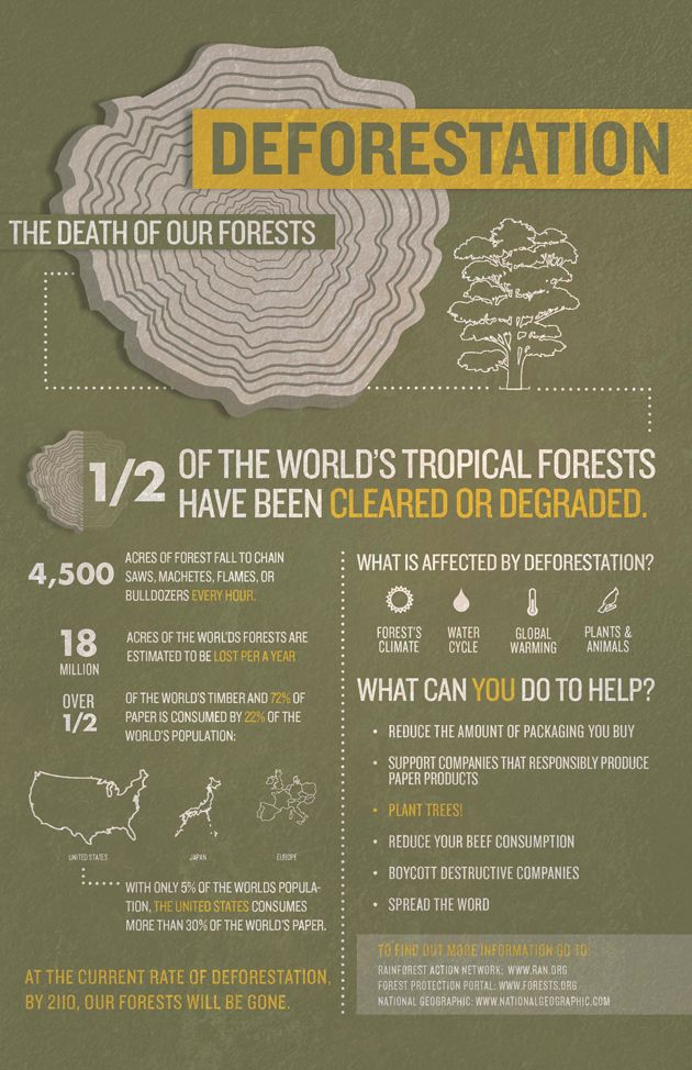 Deforestation: The Death of Our Forests. www.dogwoodalliance.org