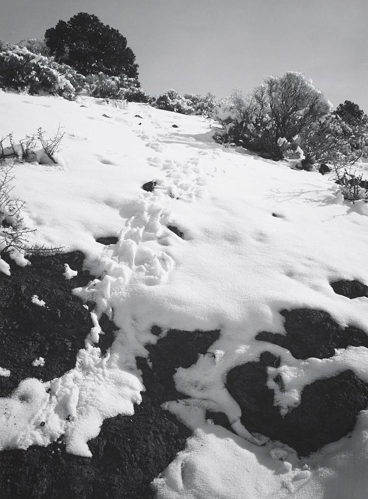 Untitled n.d. [footprints through snow, view toward crest of slope, bushes] by Ansel Adams 84.91.542