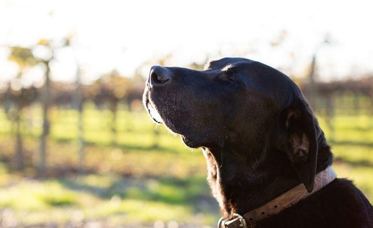 A kutyák képesek kiszagolni az időt